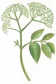 herb sale